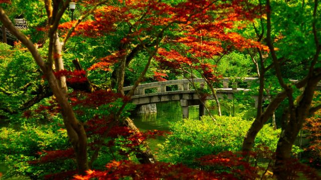 Japonya - Hong Kong - Phuket Turu Kyoto